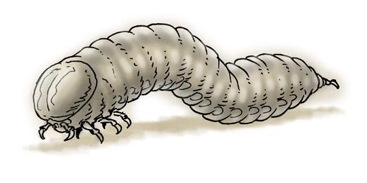 """domigorgon """"Lesser Devils 01: Larva"""" - by Domigorgon (Domagoj Rapčak) domigorgon.blogspot.com (2010-06) © dell'autore tutti i diritti riservati"""