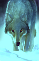winter wolf Lupo Invernale, portrait Videogame: Neverwinter Nights (2002-12) © Interplay, Wizards of the Coast & Hasbro