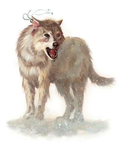 Scott Fischer Dog Trainer Nj